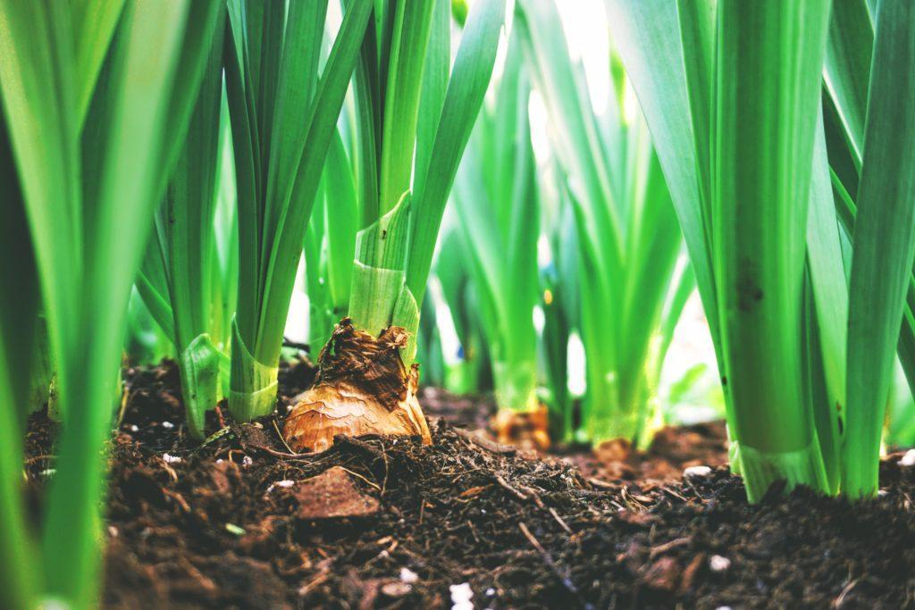 Idées d'évènement de Pâques : Rassembler les voisins pour créer un jardin de Pâques.