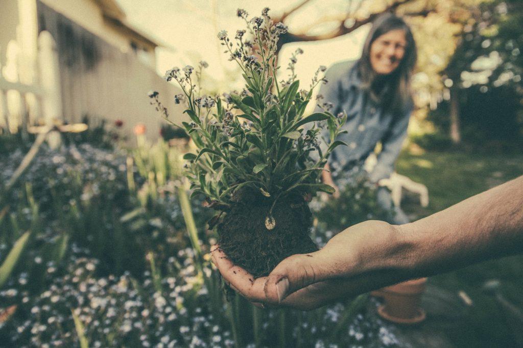 Ideas para eventos comunitarios: Organizar un día de jardinería.
